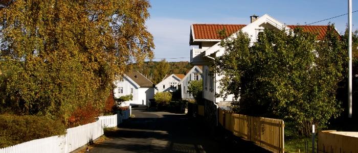 Naboforhold og trær